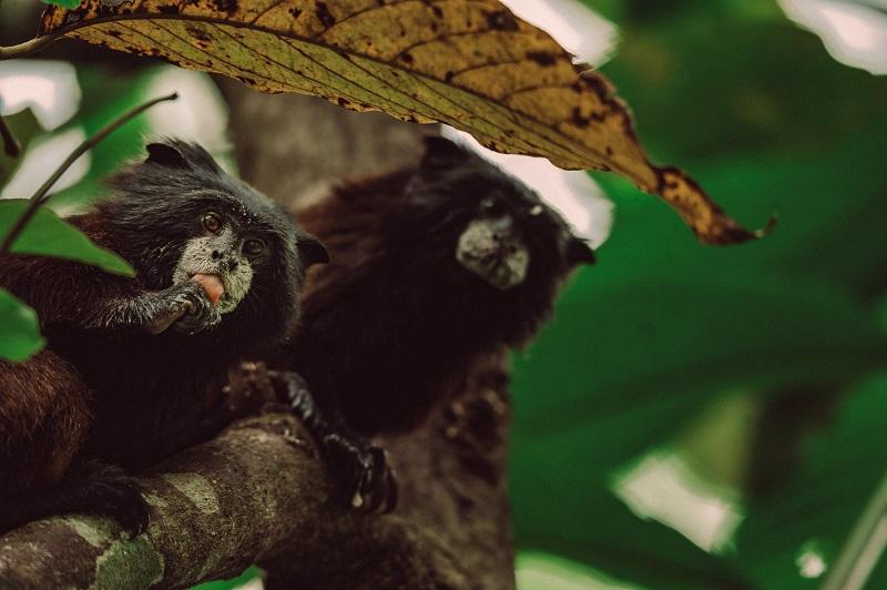 Dos monos nos miran