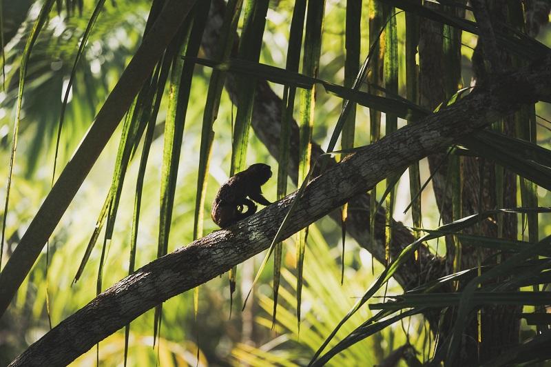un mono subiendo por las ramas