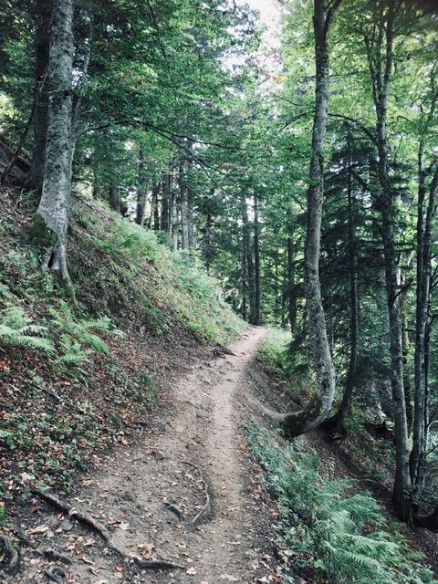 Un sendero en un bosque alpino