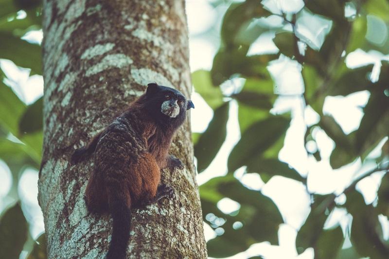 Un mono mirando al fotografo