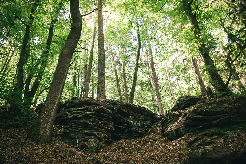Die waldeinsamkeit es un sentimiento en el bosque