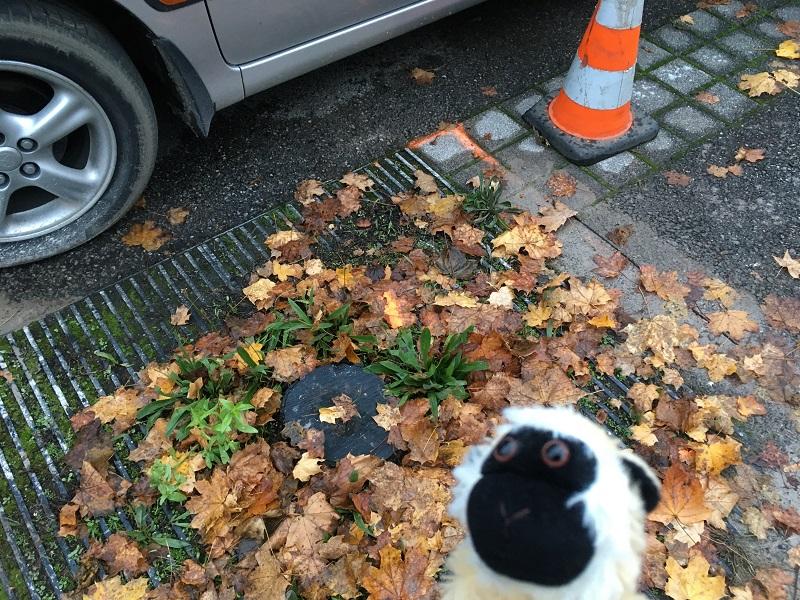 Tronco de un arbol cortado en aparcamiento