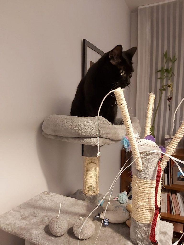 El gato Nino sobre su arbol