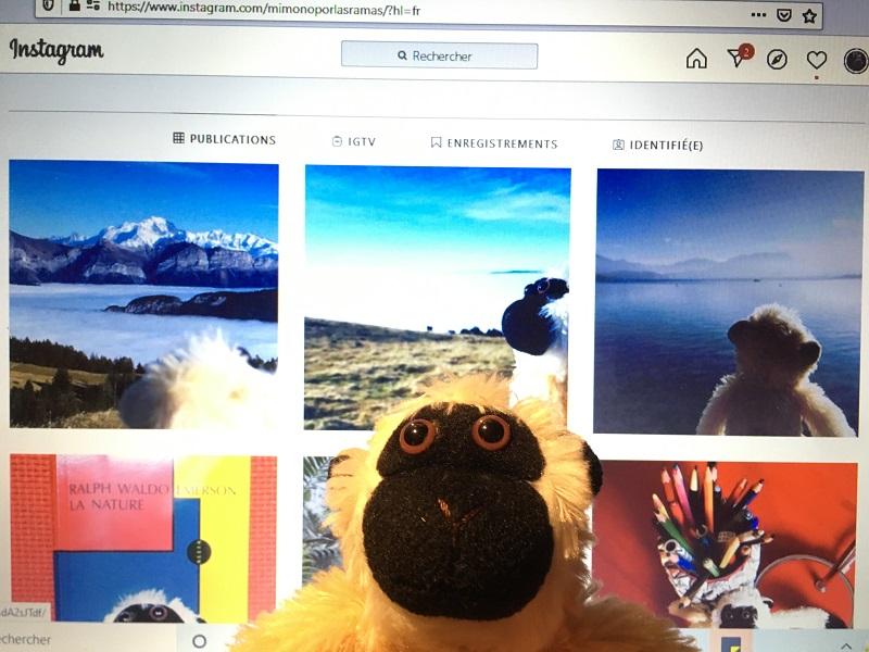Mimono abre cuenta en Instagram