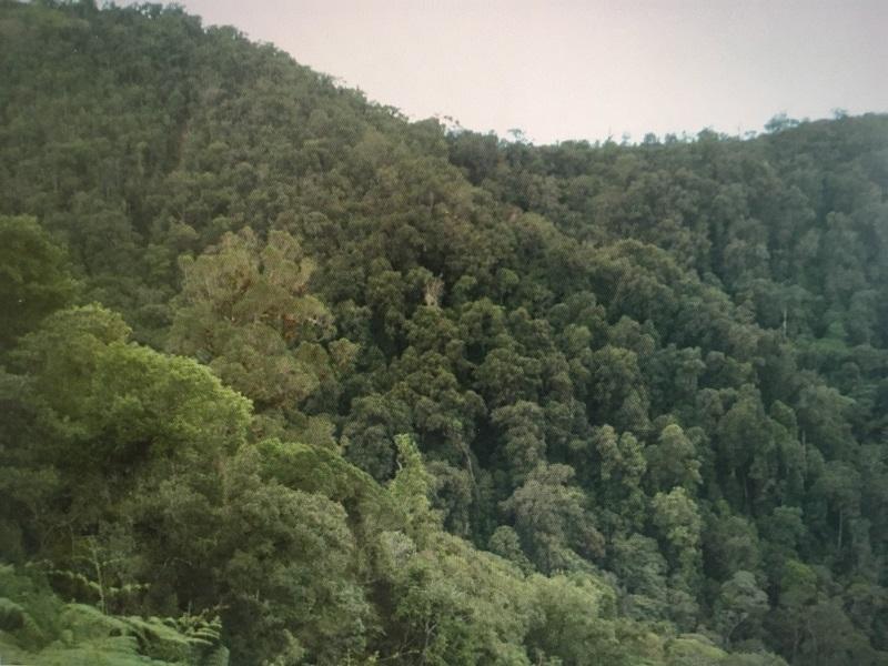 Bosque roble negro colombiano protegido en el Huila