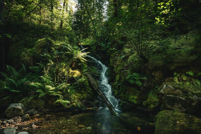 La jungla a los pies de Mimono