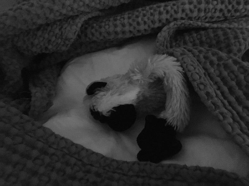 Mimono duerme profundamente